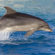 Dolphin Discovery Excursion