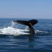 Whales and Winter Wildlife Excursion